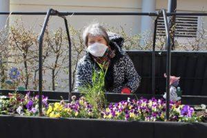 Eine Hobbygärtnerin bepflanzt ein Hochbeet auf der Terrasse der Paulinum-Begegnungsstätte an der Warte.
